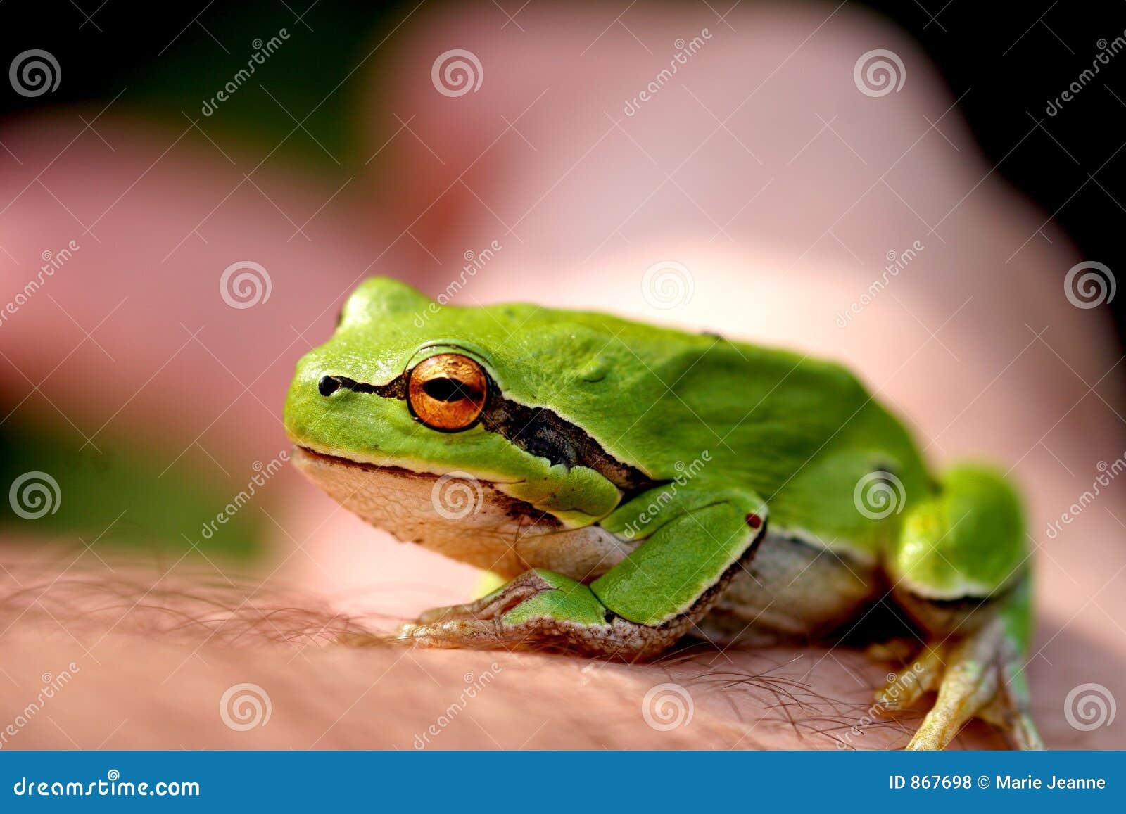 Kleiner Frosch