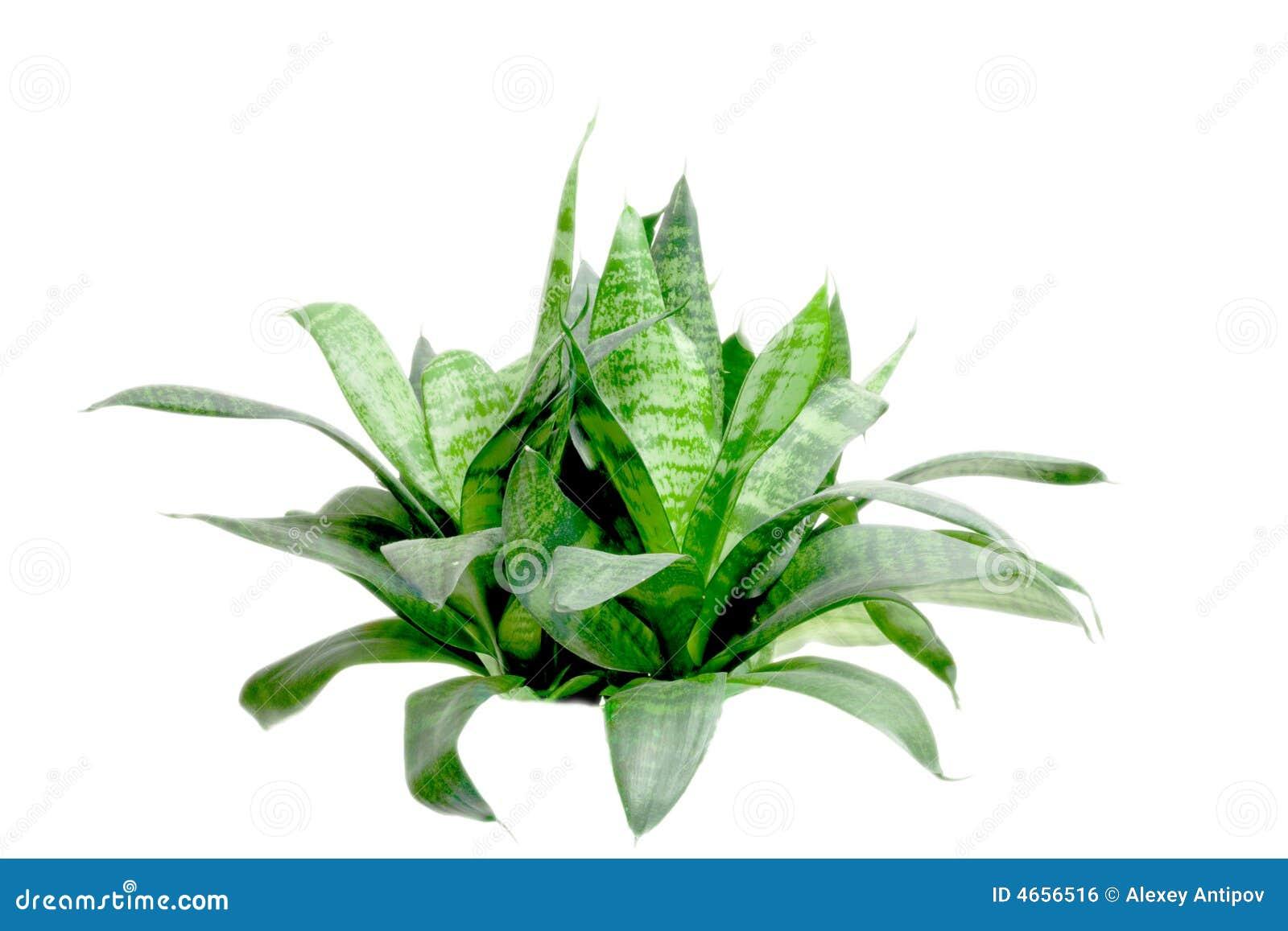 Kleiner grüner Busch