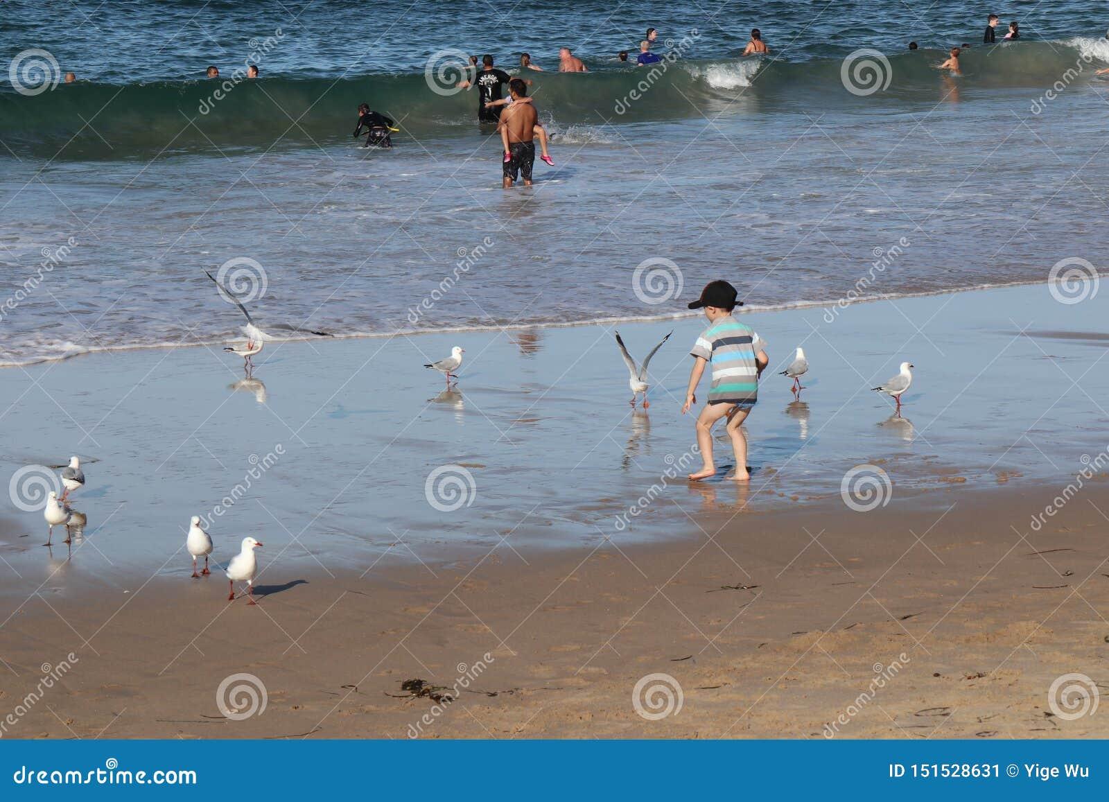 Kleiner Junge Cronulla-Strandes-D gespielt mit den Seemöwen