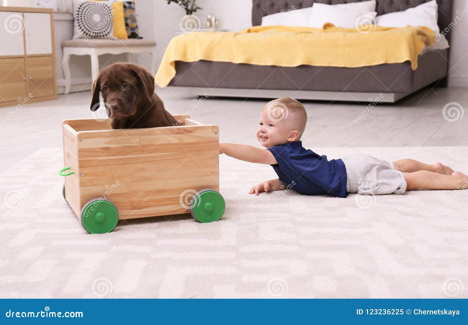 Kleiner Junge, der mit entzückender Schokolade labrador retriever spielt