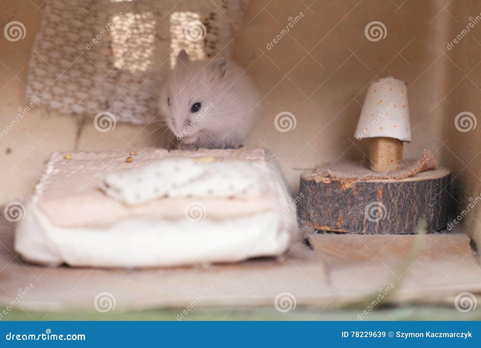 Kleiner Lustiger Hamster Auf Dem Bett In Einem Kleinen Stellen Sich