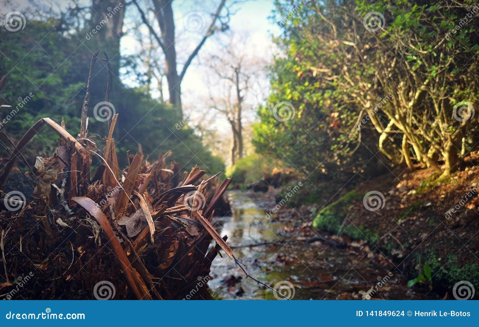Kleiner Nebenfluss im Richmond-Park