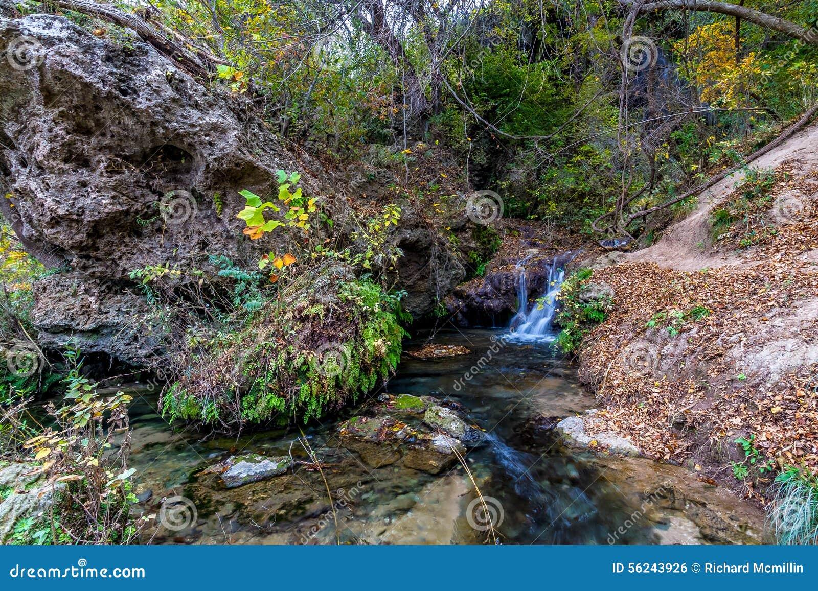 Kleiner Nebenfluss im Wald in Texas
