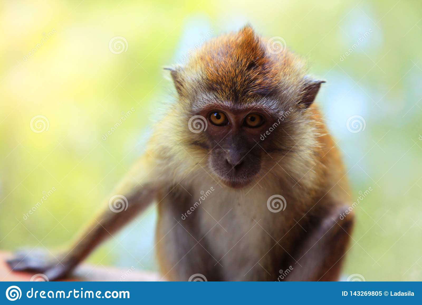 Kleiner trauriger Affe