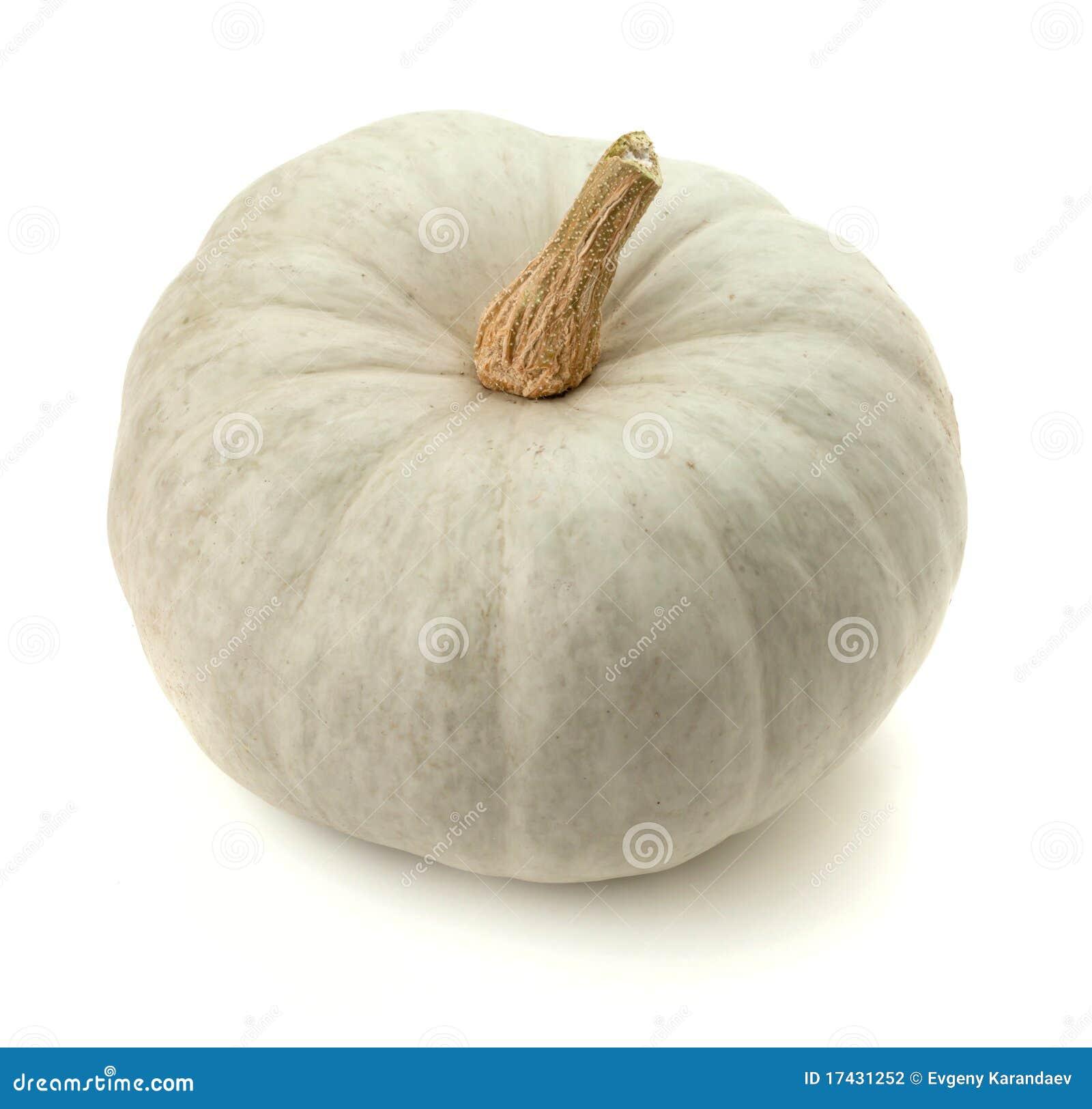 Kleiner Weißer Kürbis Stockfoto Bild Von Halloween Betrieb 17431252
