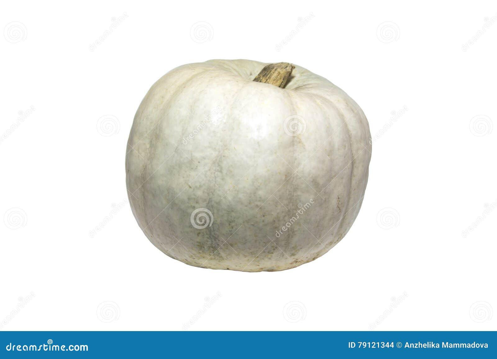 Kleiner Weißer Kürbis Stockfoto Bild Von Wenig Nahrung 79121344