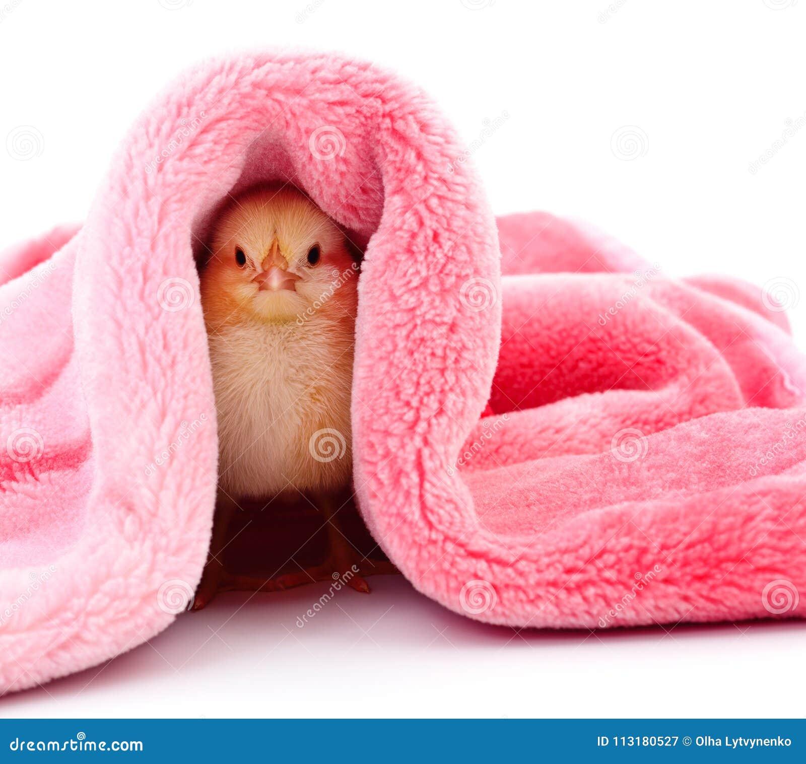Kleines Huhn unter einer Decke