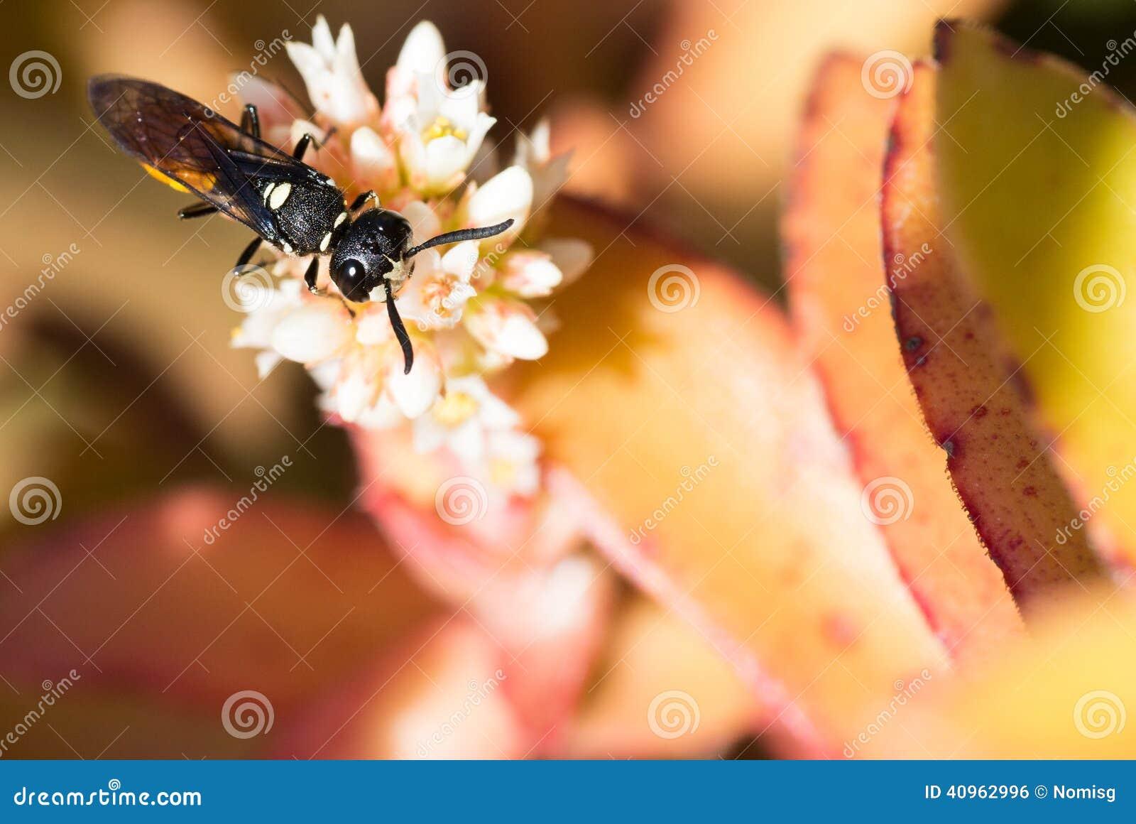 kleines insekt auf wei er blume stockfoto bild 40962996. Black Bedroom Furniture Sets. Home Design Ideas