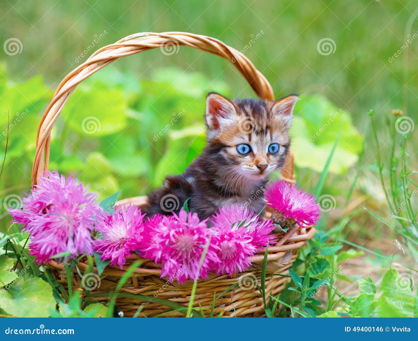Download Kleines Kätzchen In Einem Korb Mit Blumen Stockfoto - Bild von traum, flora: 49400146