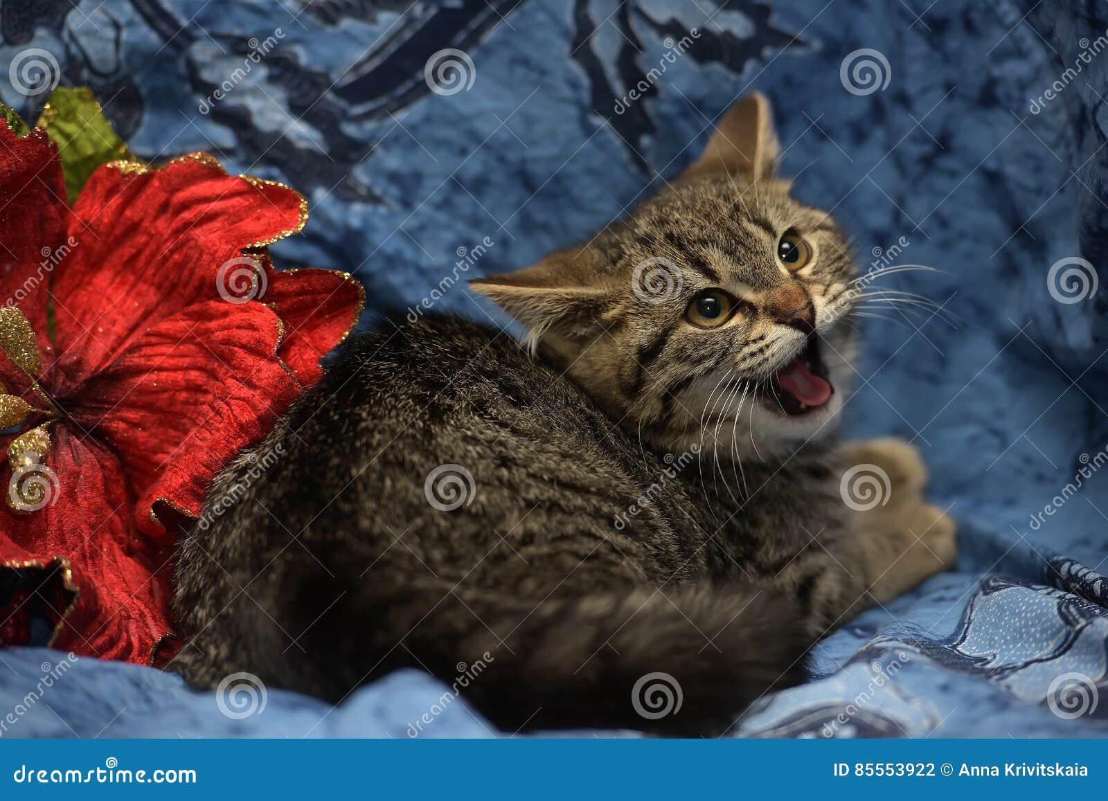 Kleines Kätzchenzischen