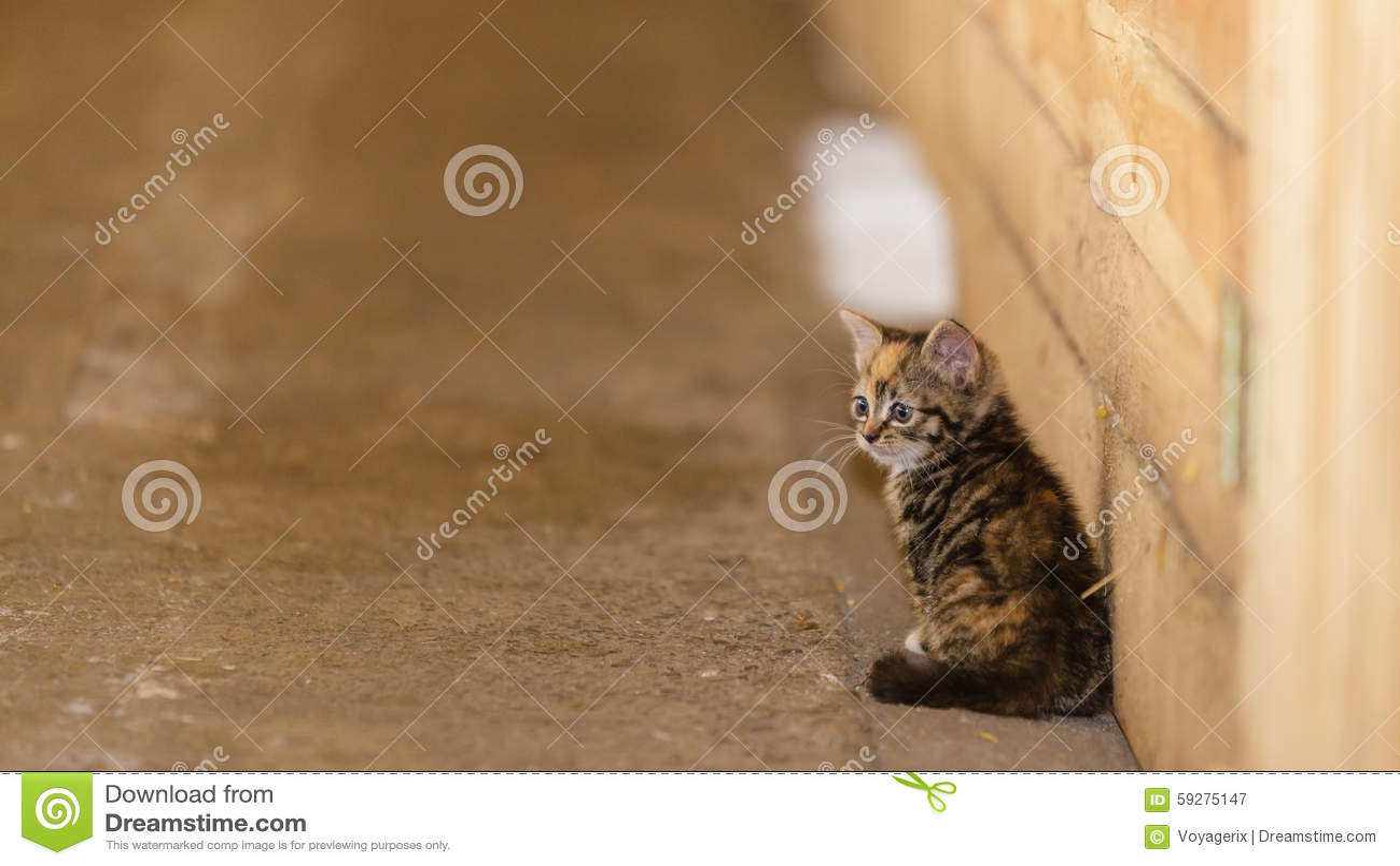 Kleines nettes Kätzchenmiezekatzekatzen-Haustiertier