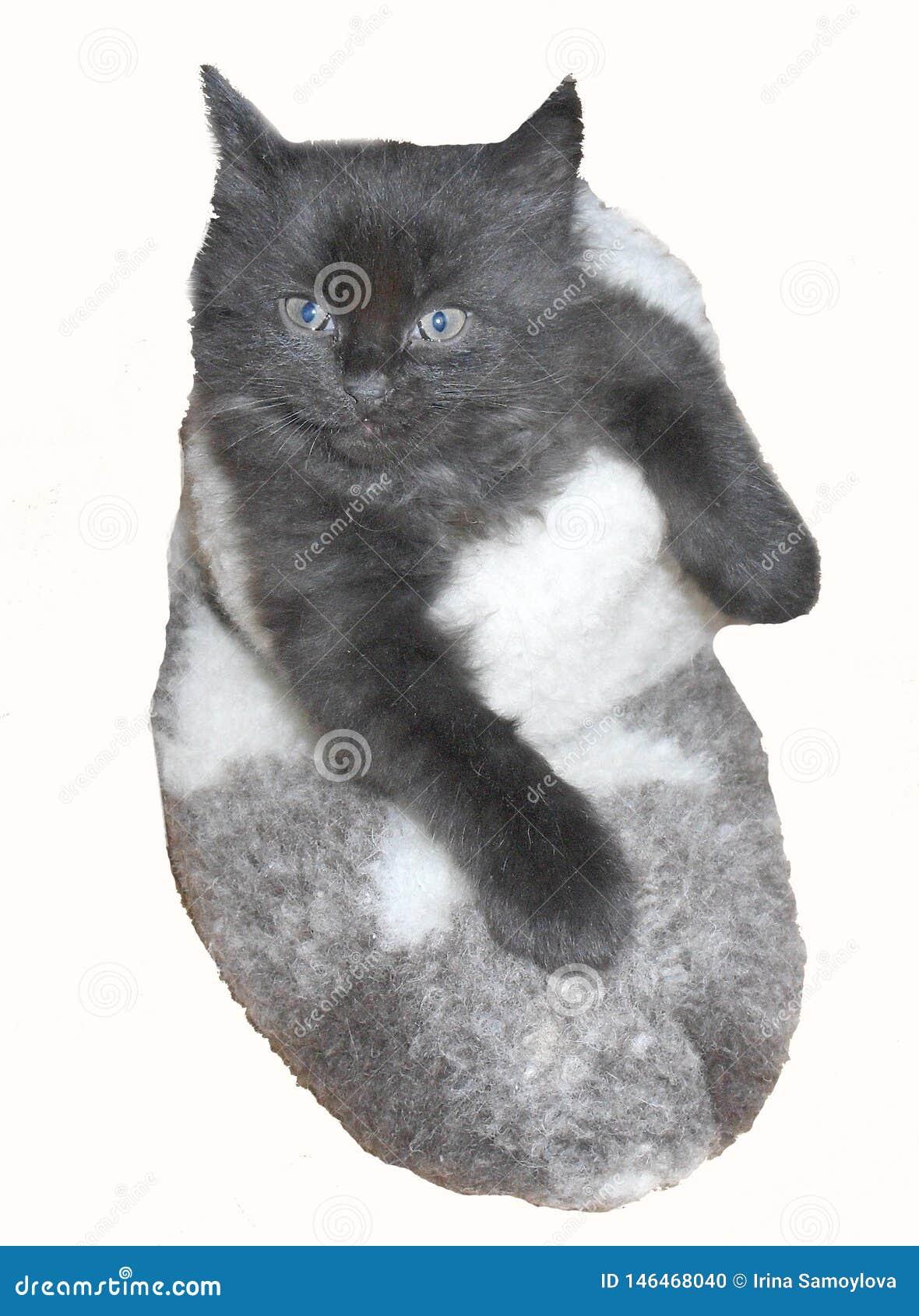 Kleines nettes schwarzes Kätzchen im Filzstiefel