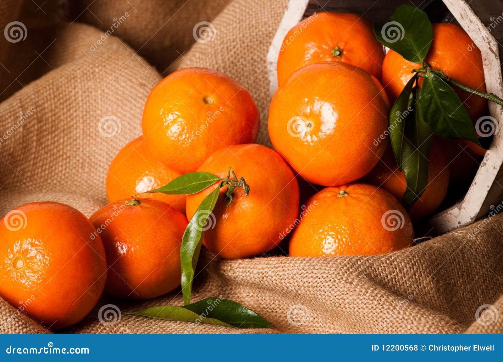 Klementine-noch Leben