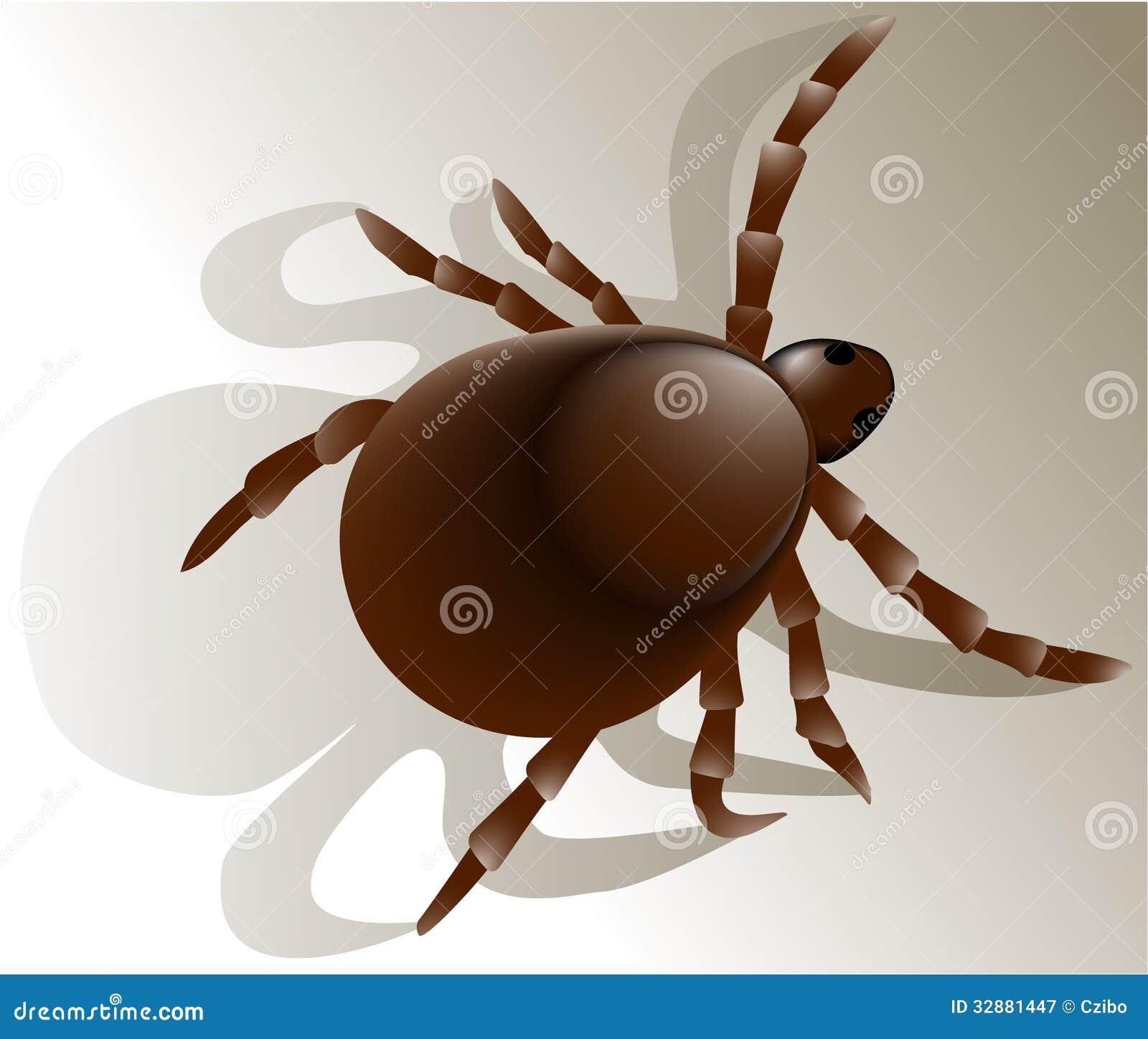 Kleszczowy insekt