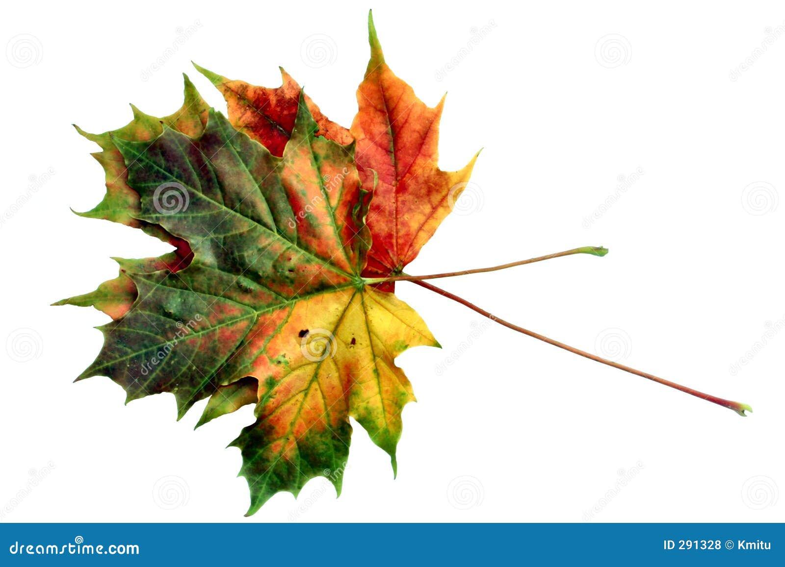 Kleuren van de herfst #12