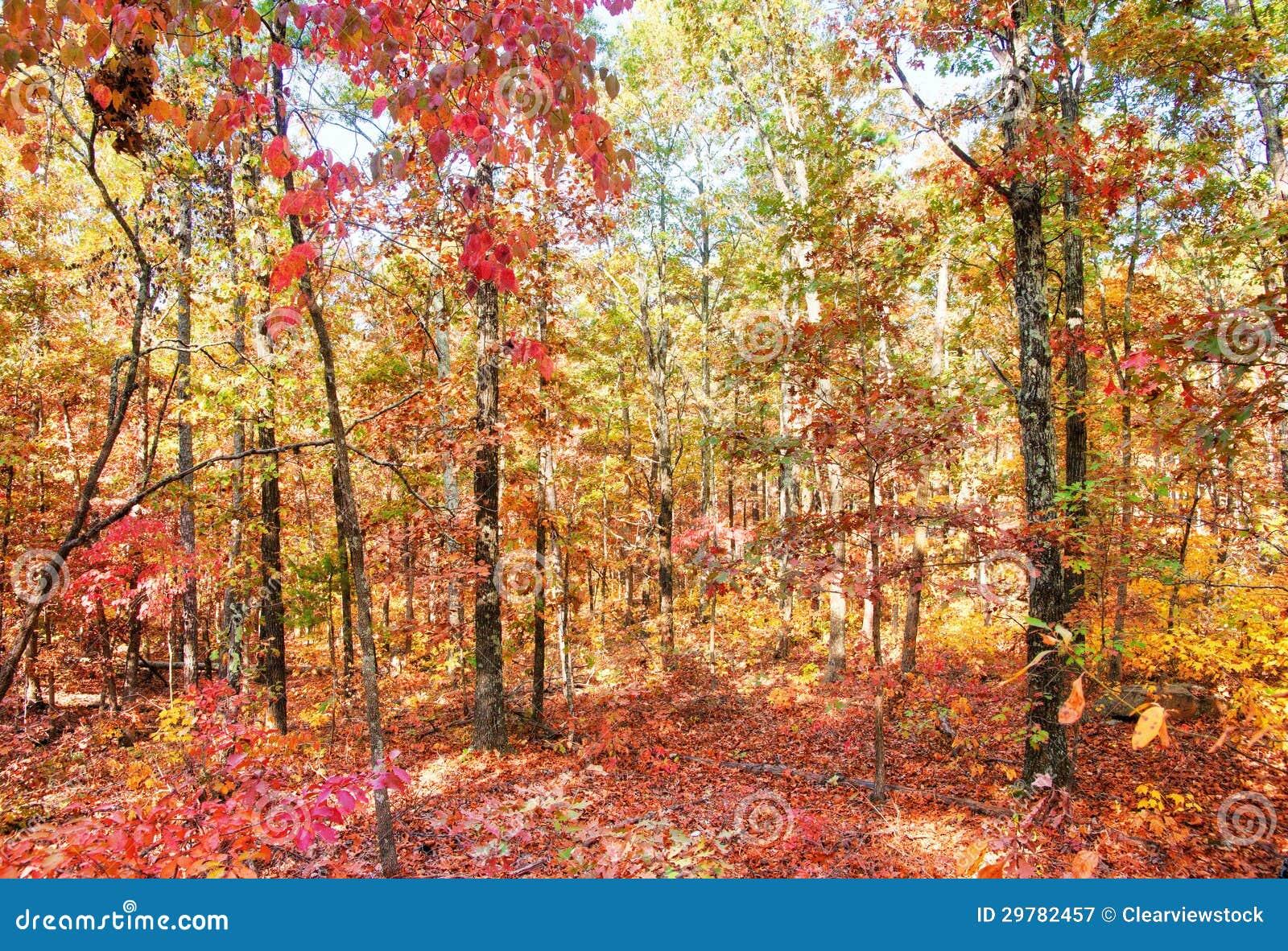 Kleuren van de herfst of daling van bos