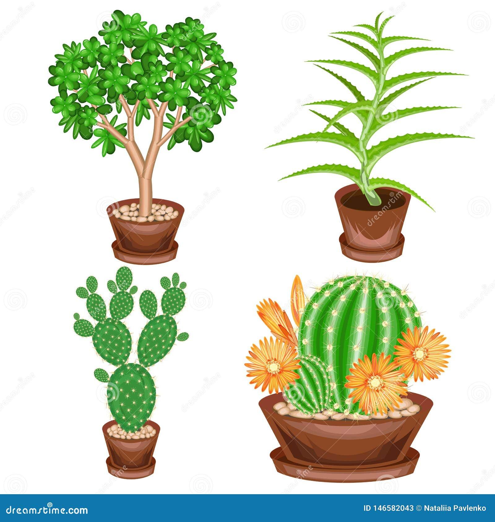 Kleurenbeeld Een inzameling van houseplants in potten Crassula, alo? Vera, stekelige peer, Mammillaria Mooie hobby voor collector