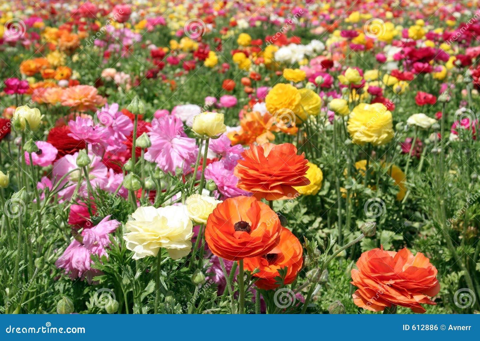 Kleurrijk bloemgebied
