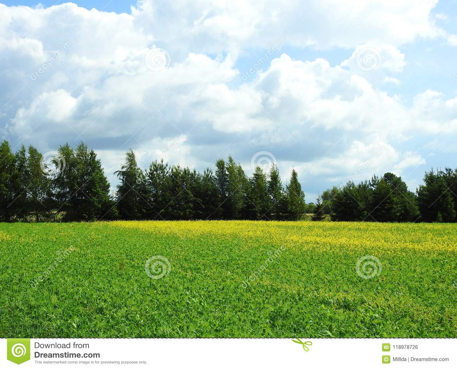 Kleurrijk gebied in de zomer, Litouwen