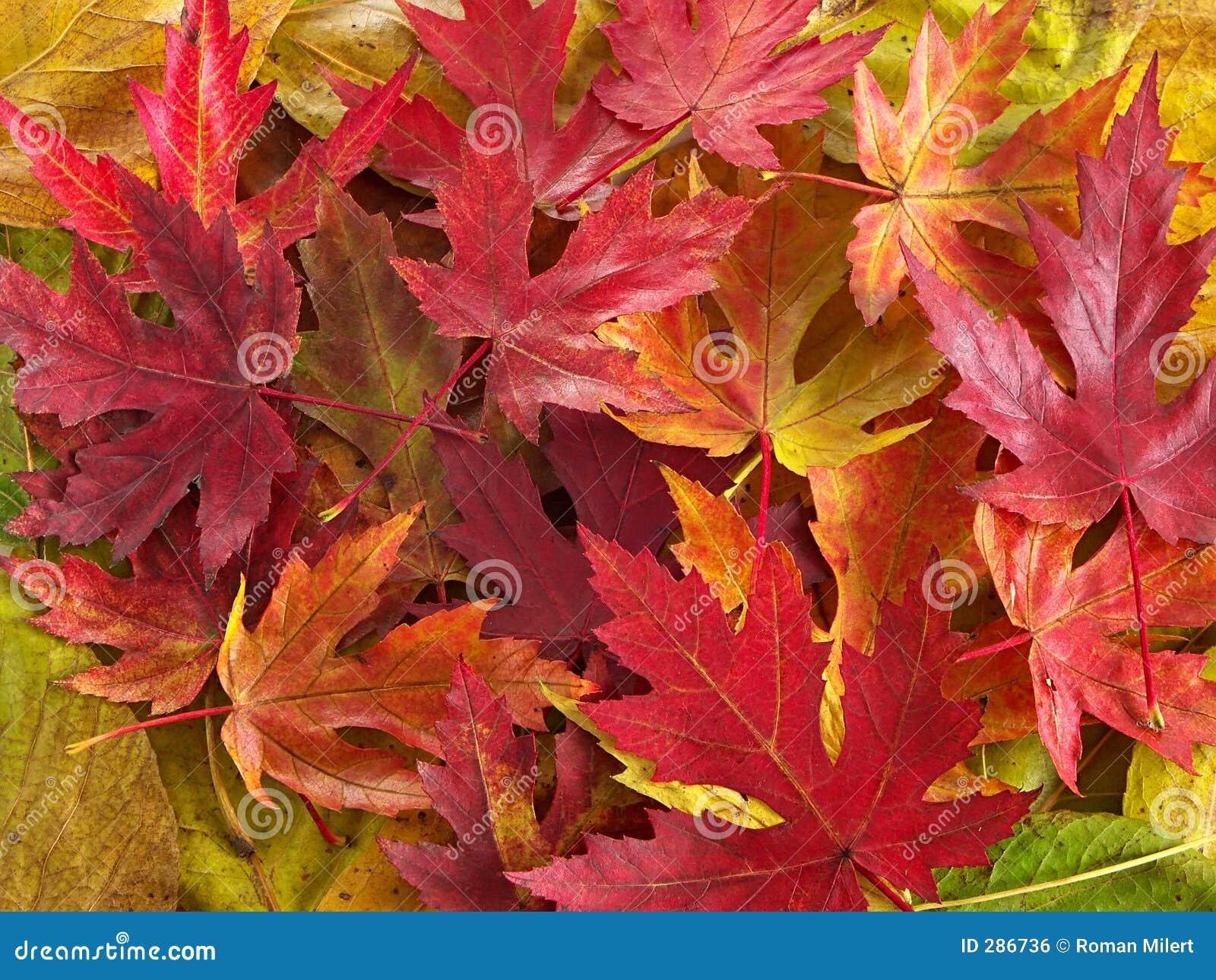 Kleurrijke bladeren
