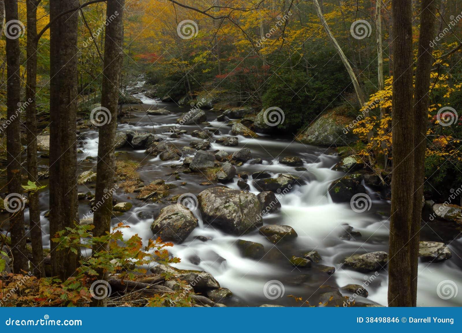 Kleurrijke Bladeren in Great Smoky Mountains, TN, de V.S.