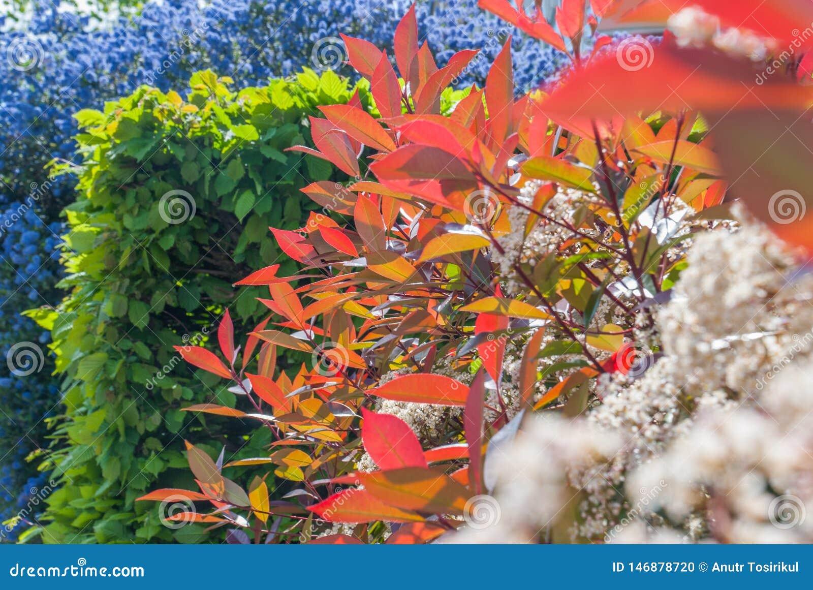 Kleurrijke bladeren in Isabella Plantation Suitable voor het maken van achtergrondafbeeldingen