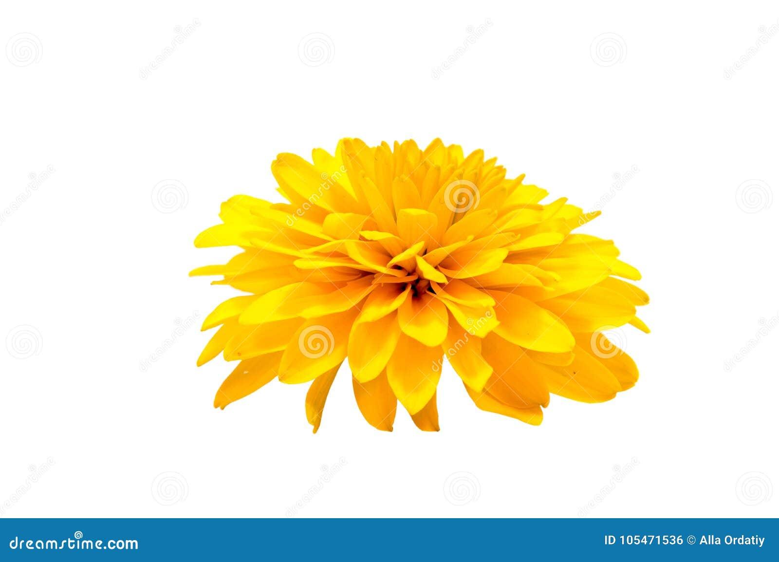 Kleurrijke bloemen die op witte achtergrond worden geïsoleerd