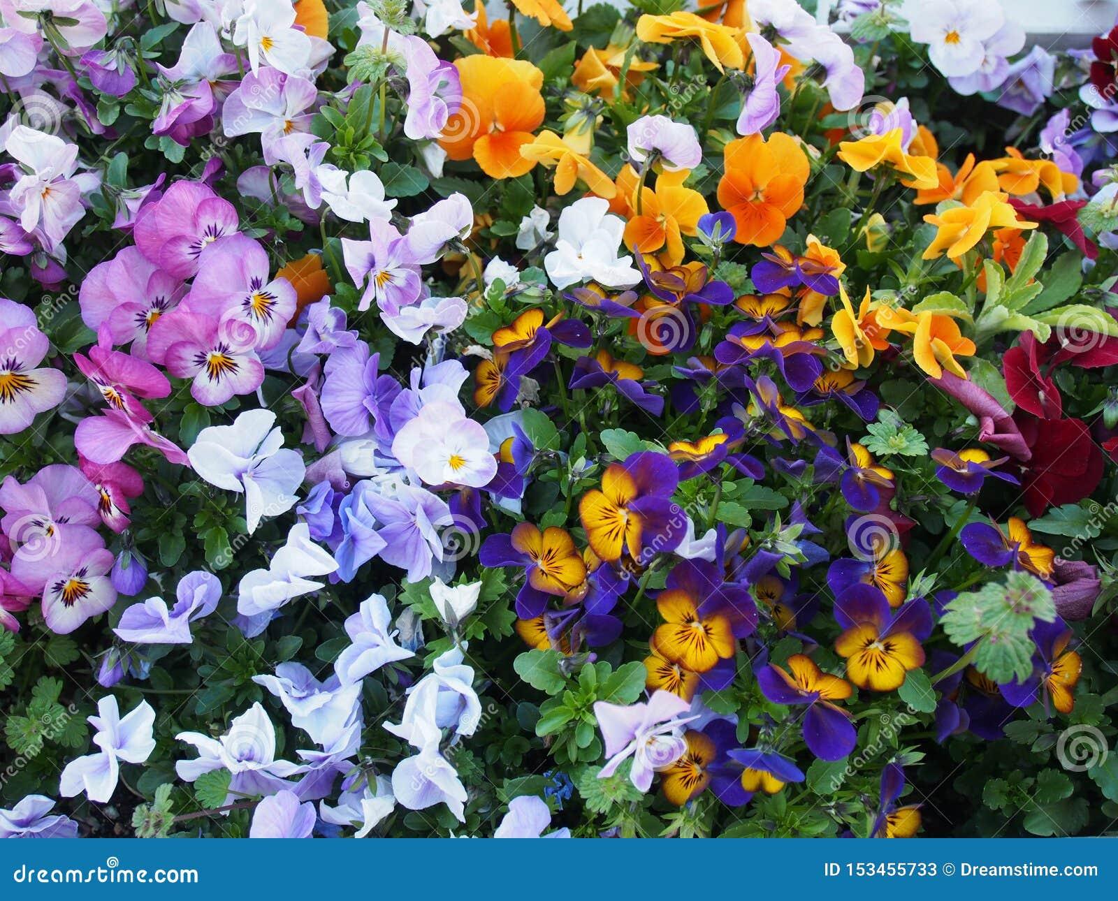 Kleurrijke Bloemen Osaka Japan Travel