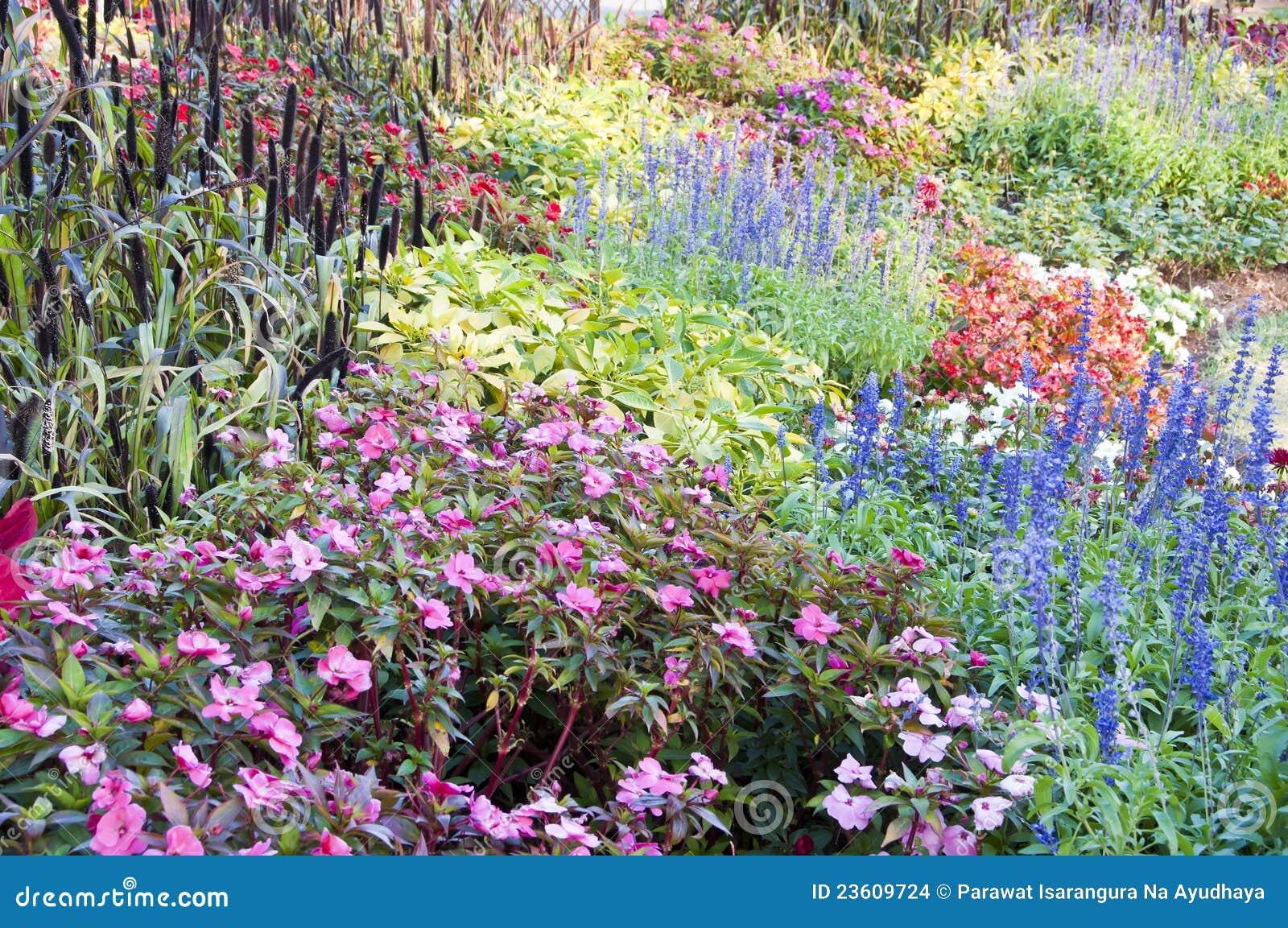 Bloem En Tuin : Kleurrijke bloementuin. stock foto. afbeelding bestaande uit ontwerp