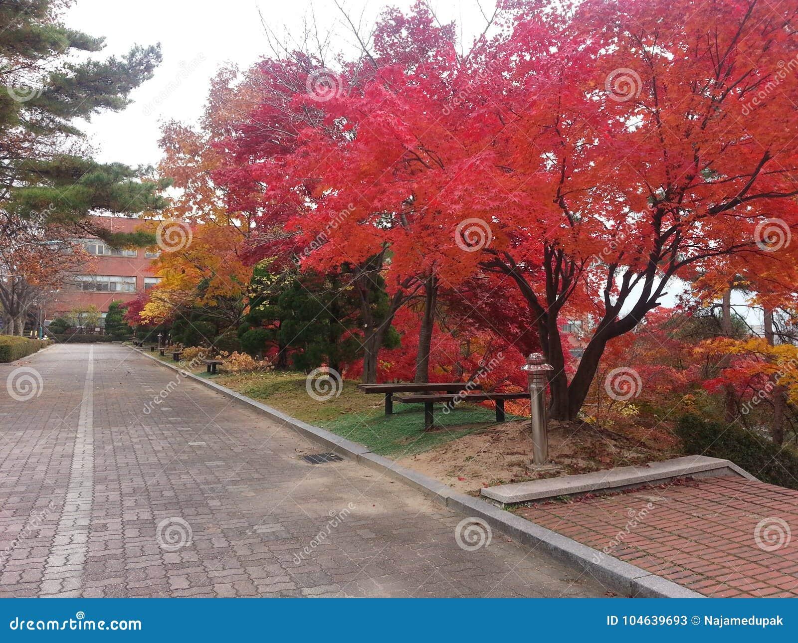 Download Kleurrijke Bomen Aan Kanten Van Voetweg I Park Stock Afbeelding - Afbeelding bestaande uit tijdens, park: 104639693