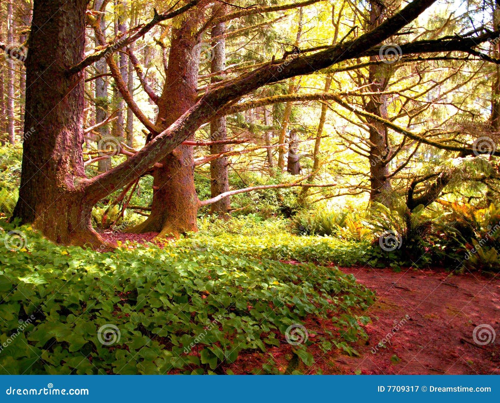 Kleurrijke bomen en klimop 530B