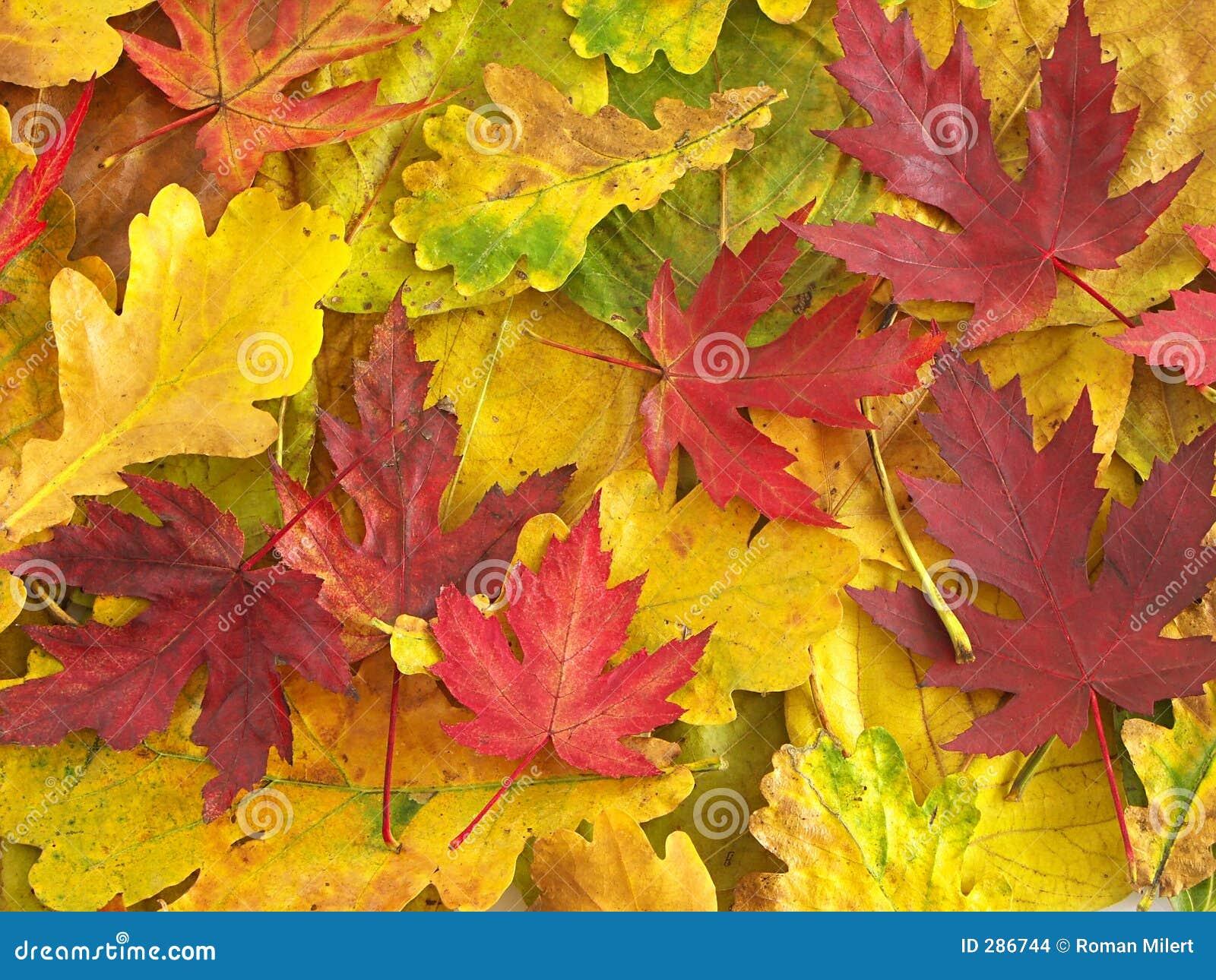Kleurrijke dalingsbladeren