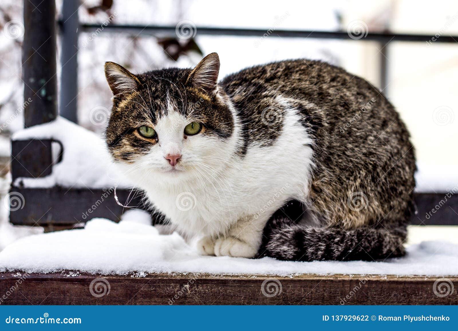 Kleurrijke kattenzitting op de stap in de winter