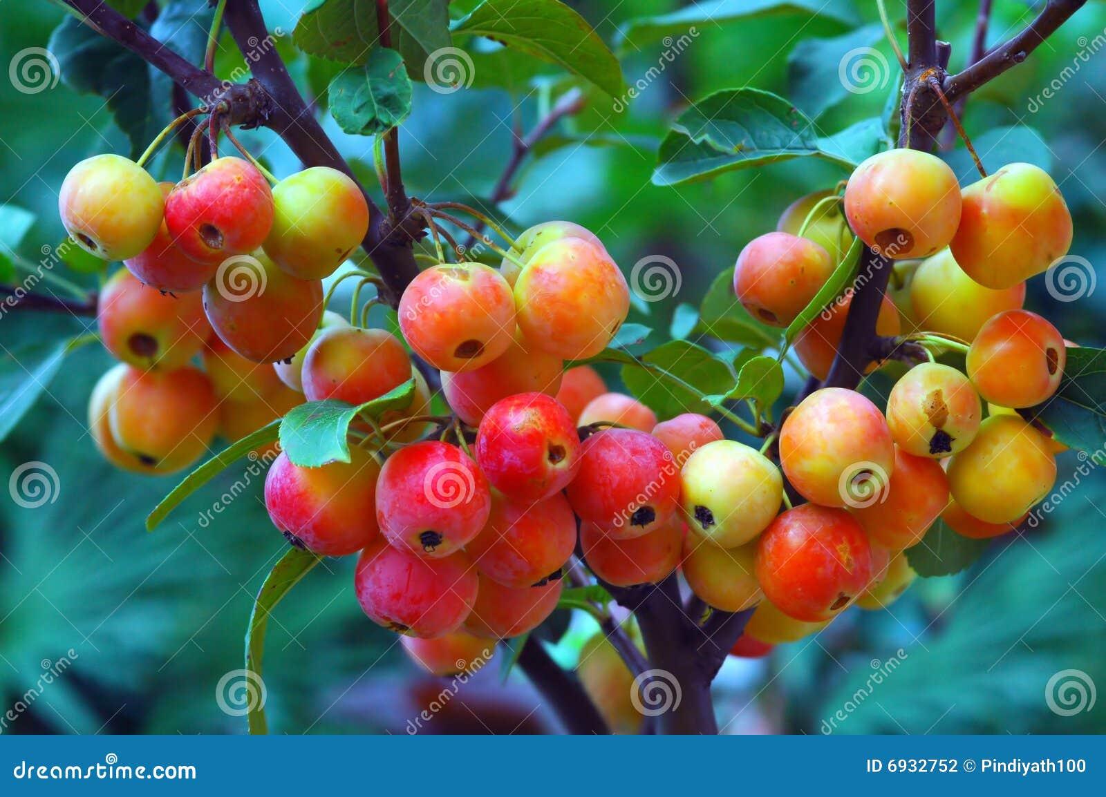 Kleurrijke Kleine Bessen