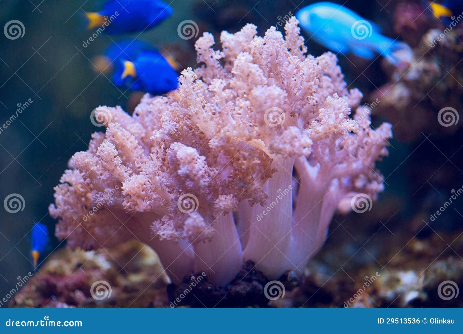 Kleurrijke koralen