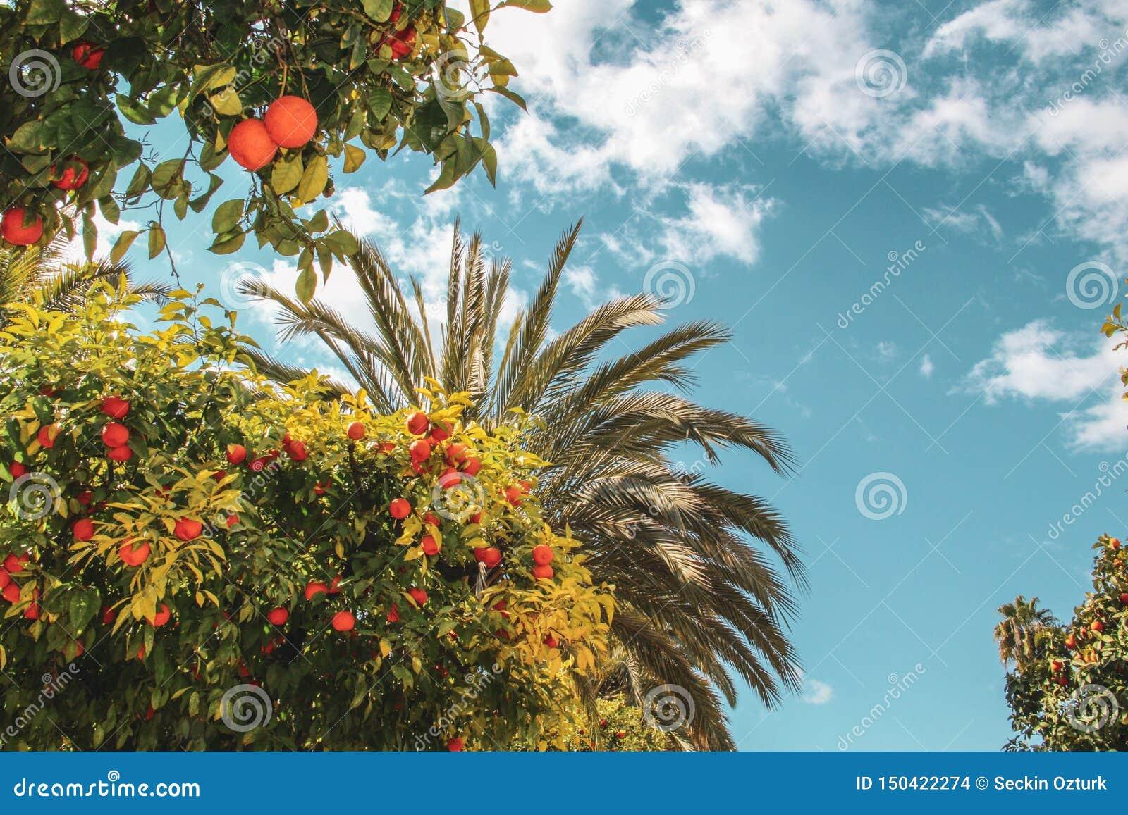 Kleurrijke oranje boom en palmen