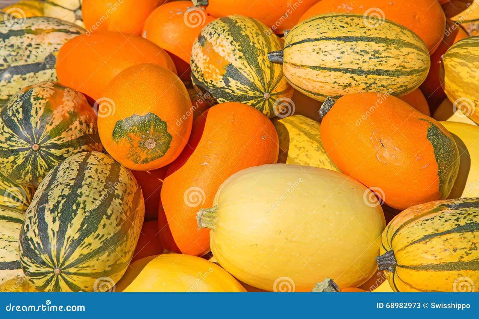 Kleurrijke pompoenen