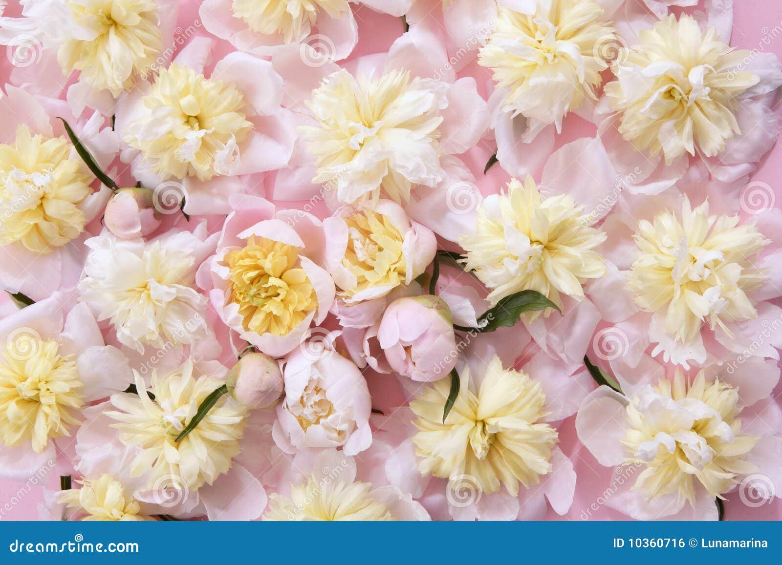 Kleurrijke roze en gele bloemenachtergrond