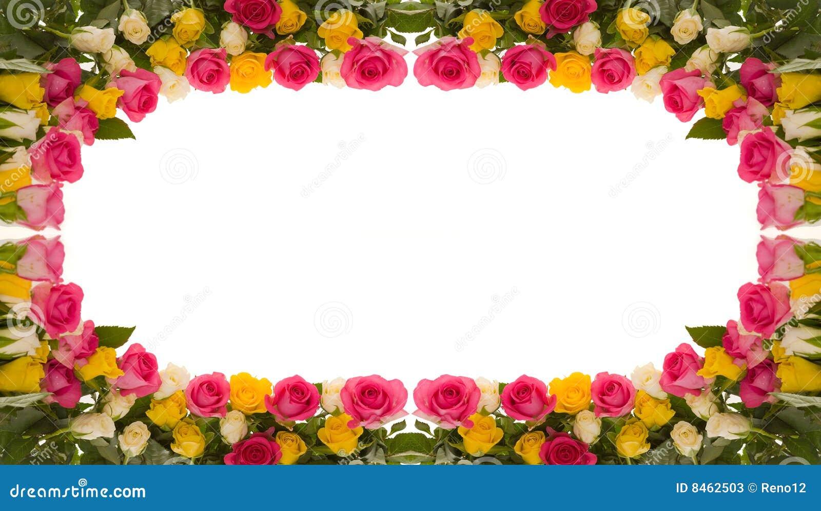 Kleurrijke rozen