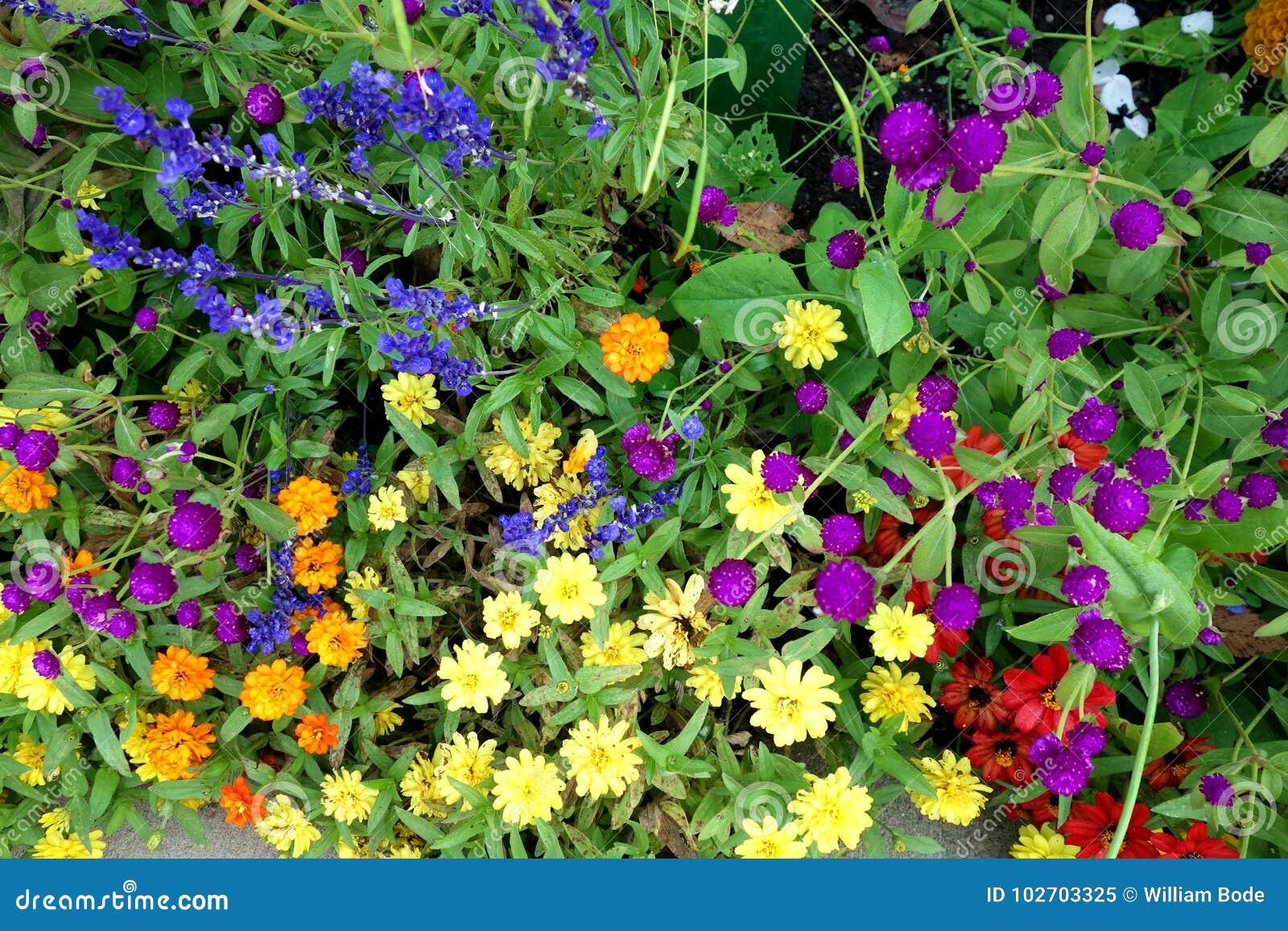 Kleurrijke Serie van Bloemen