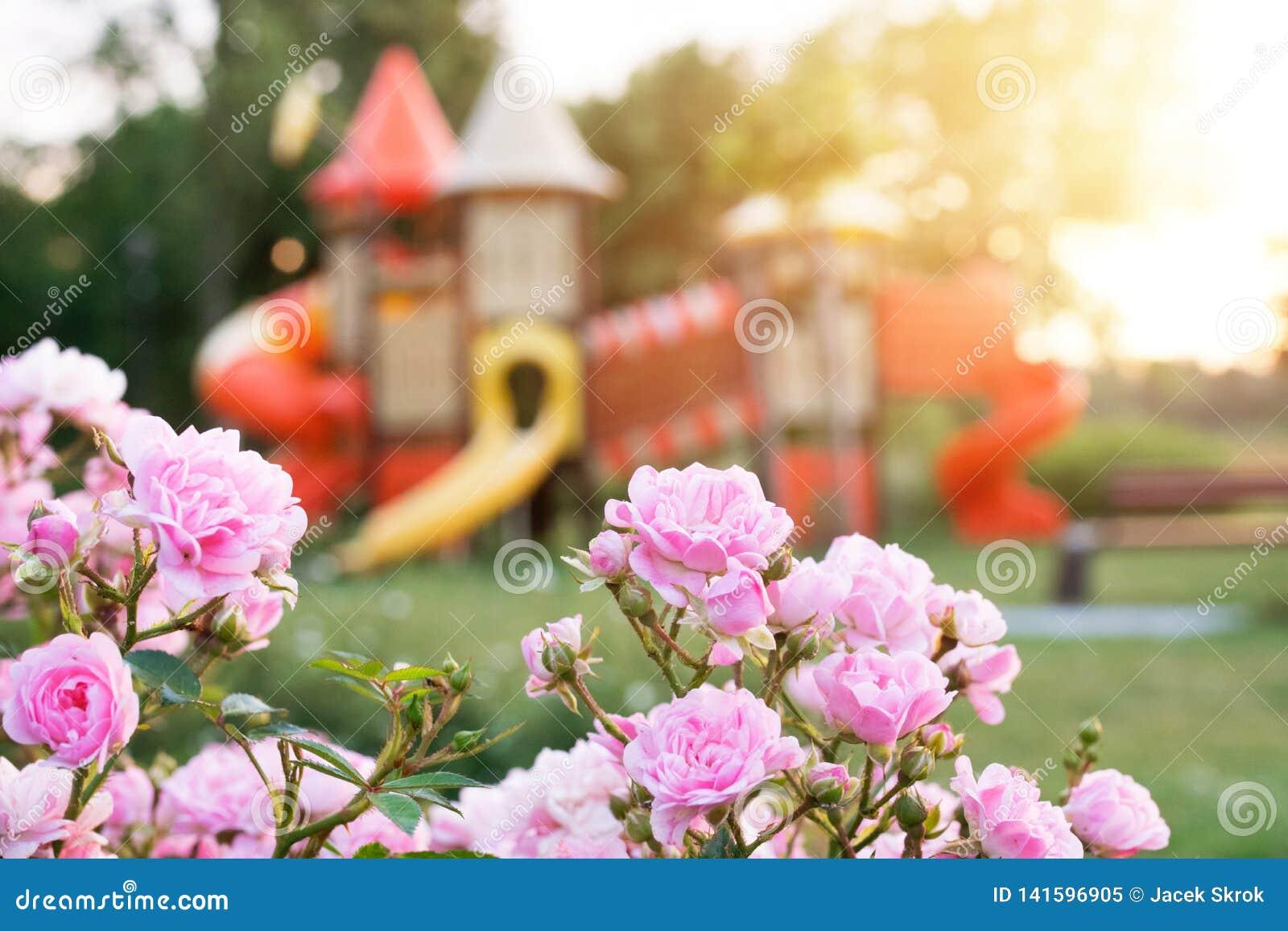 Kleurrijke speelplaats in het vage park