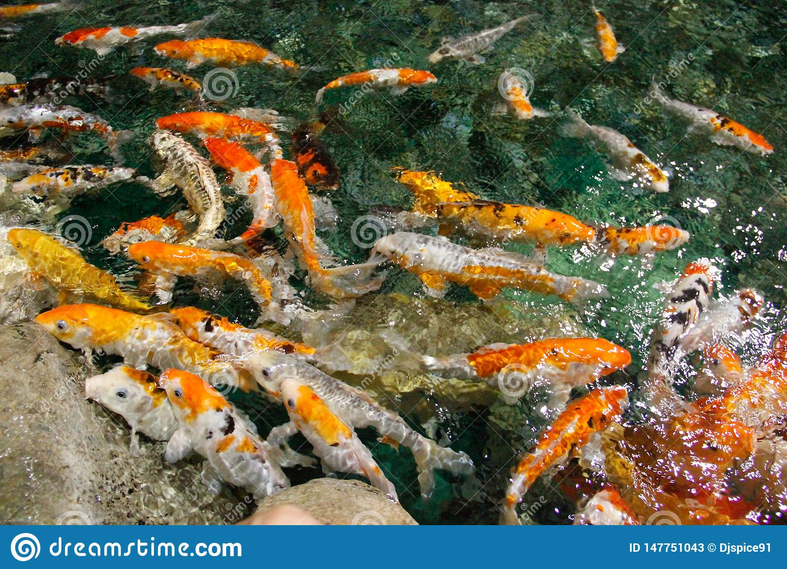 Kleurrijke vissen in zeewater