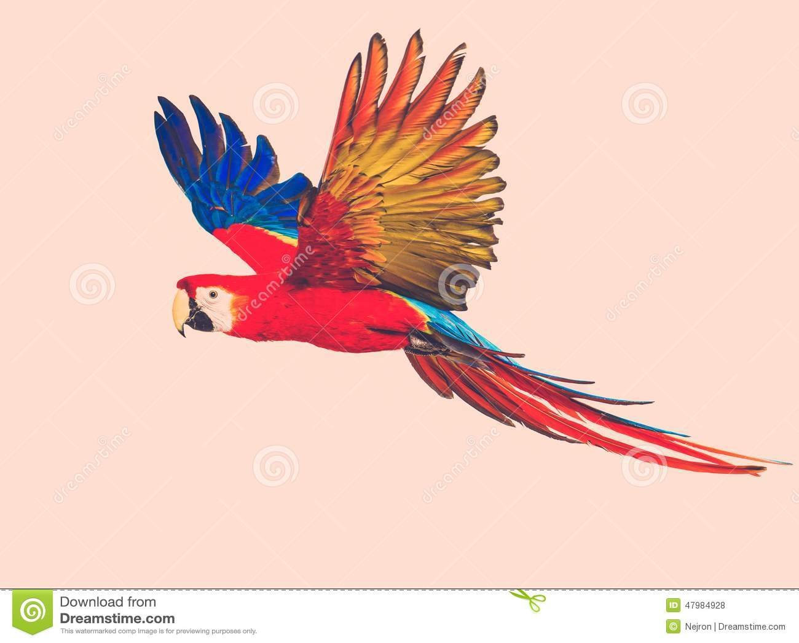 Kleurrijke vliegende papegaai