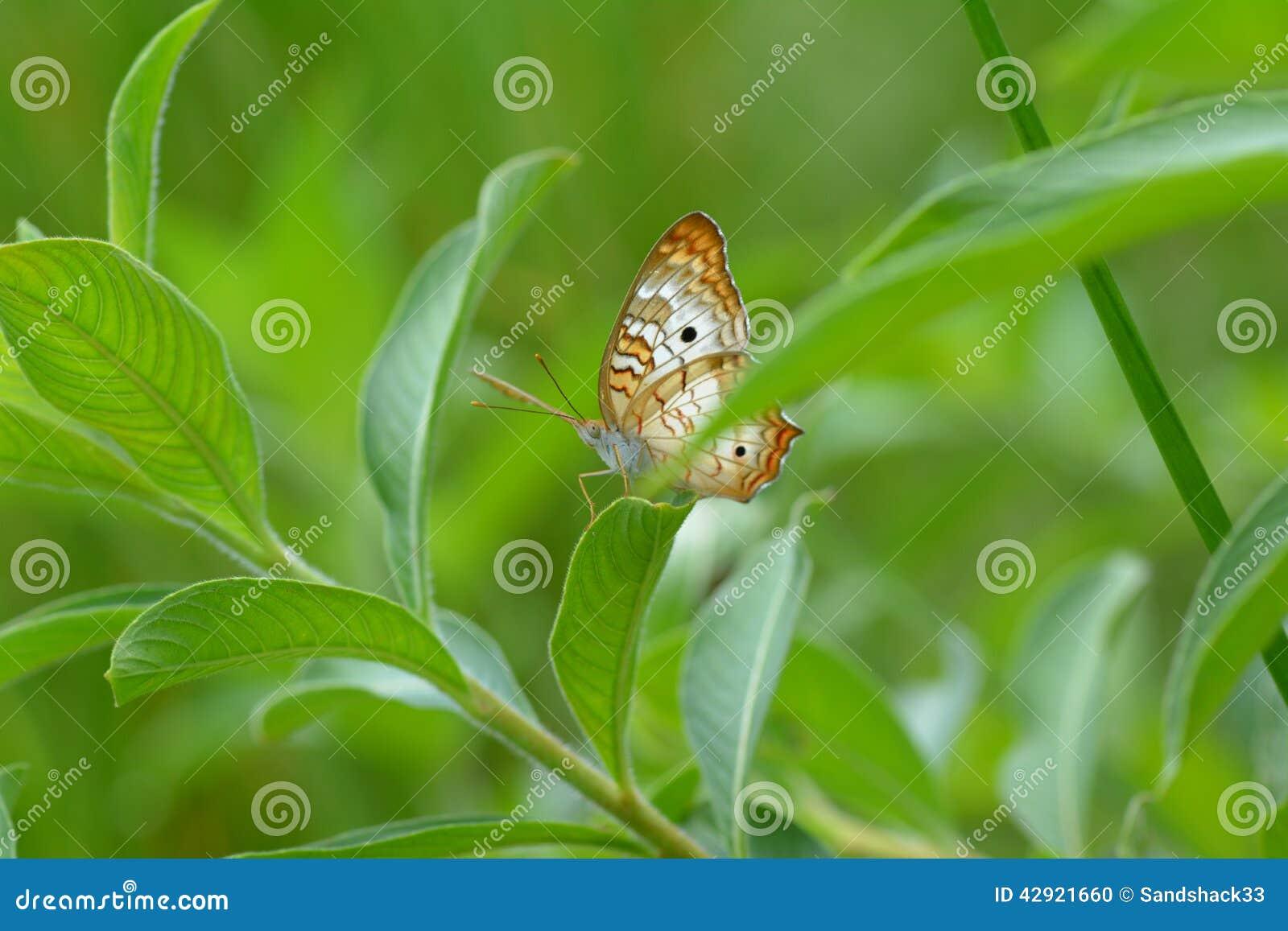 Kleurrijke Vlinder II