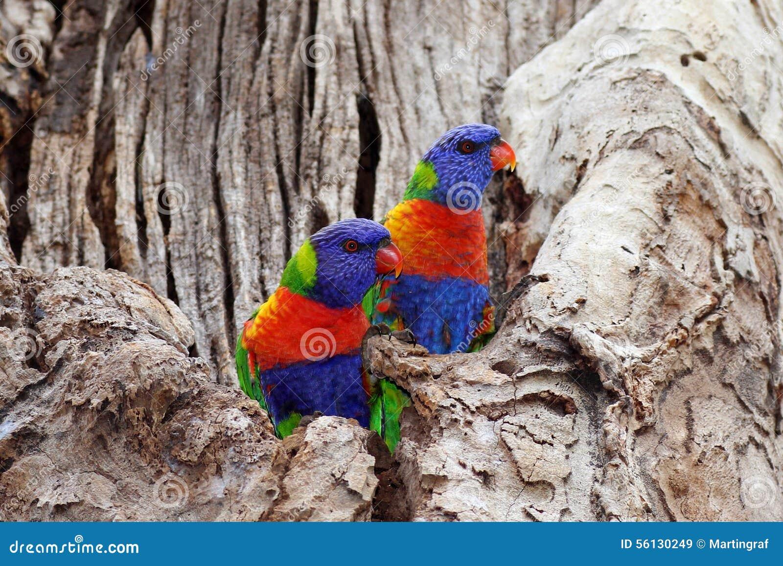 Kleurrijke vogels in zwart-wit boom