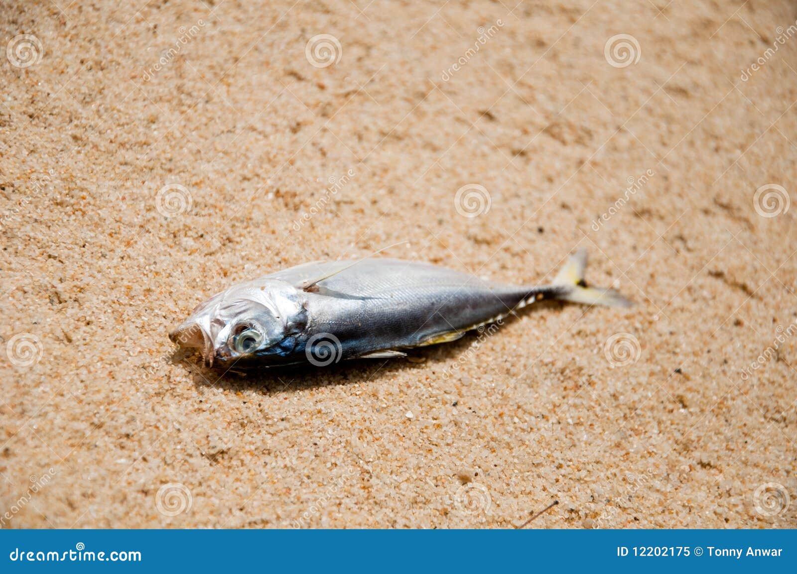 Klima-Änderung - toter Fisch