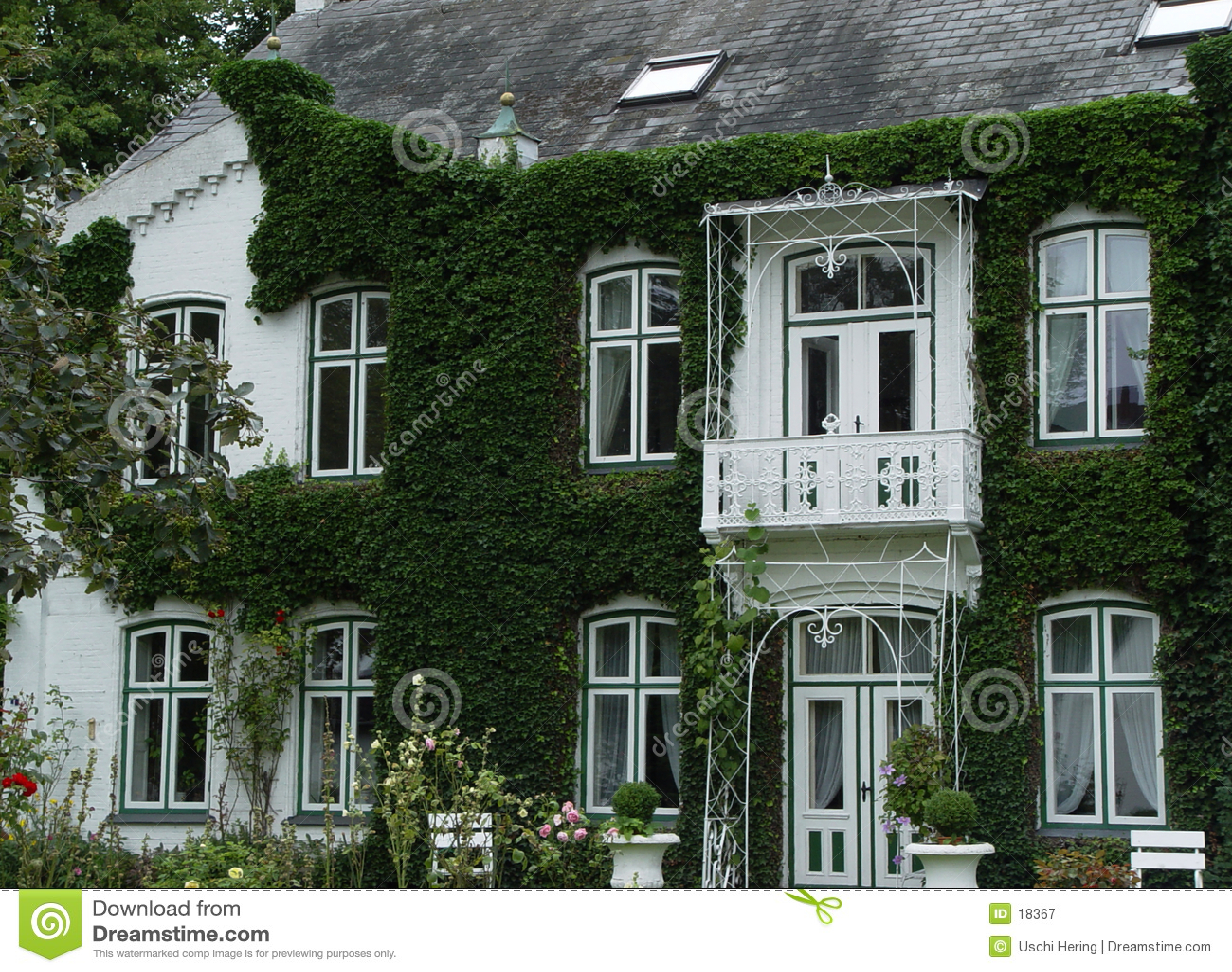Klimop villa
