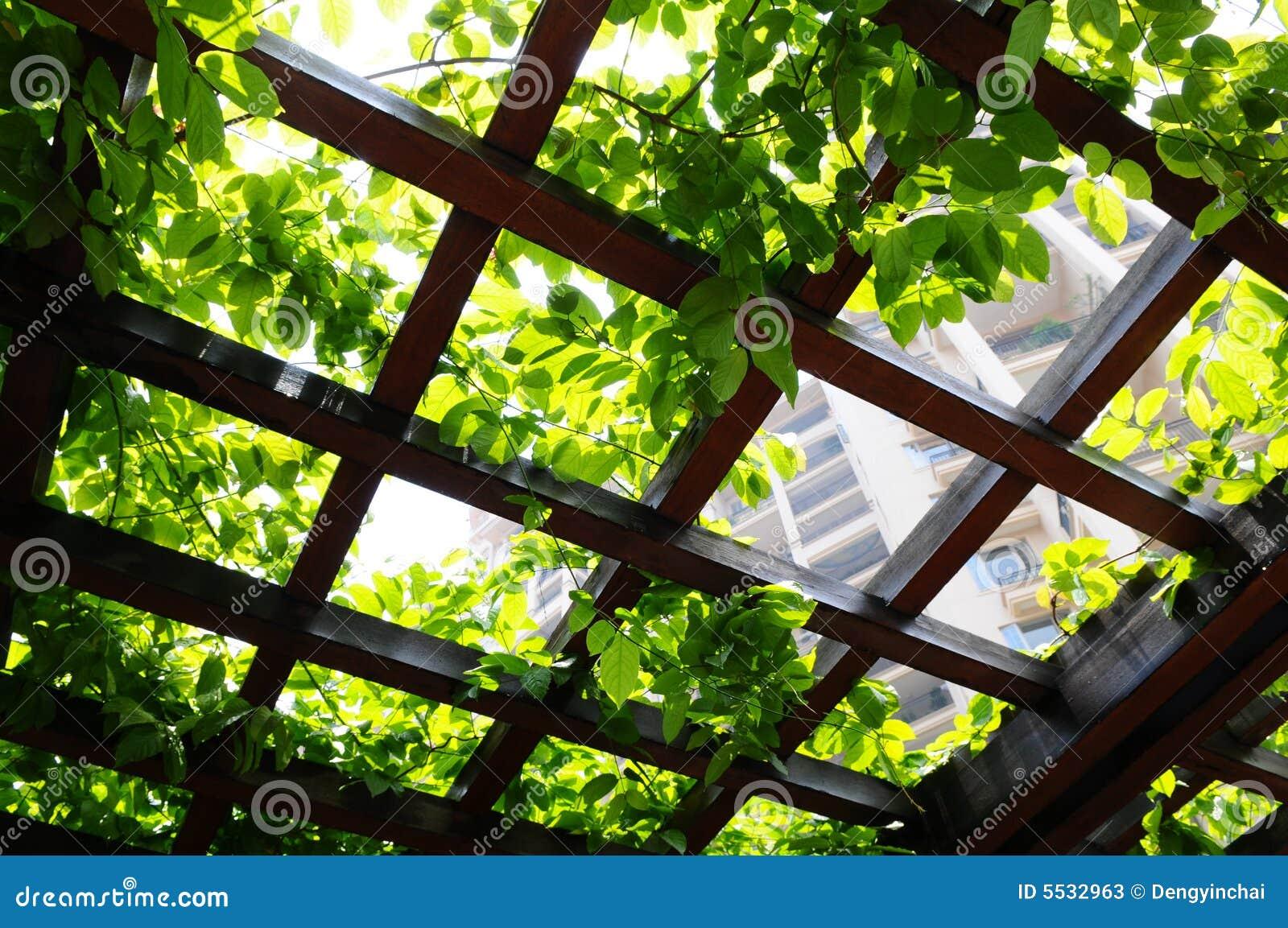 Klimplant op de pergola stock foto 39 s beeld 5532963 - Pergola klimplant ...