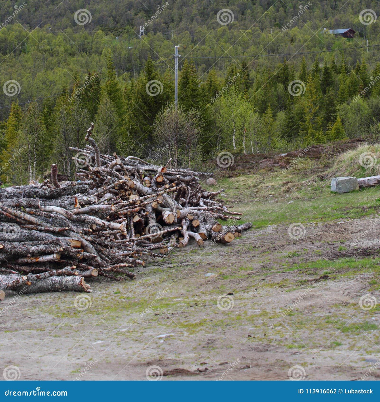 Klipp ner träd i skogen