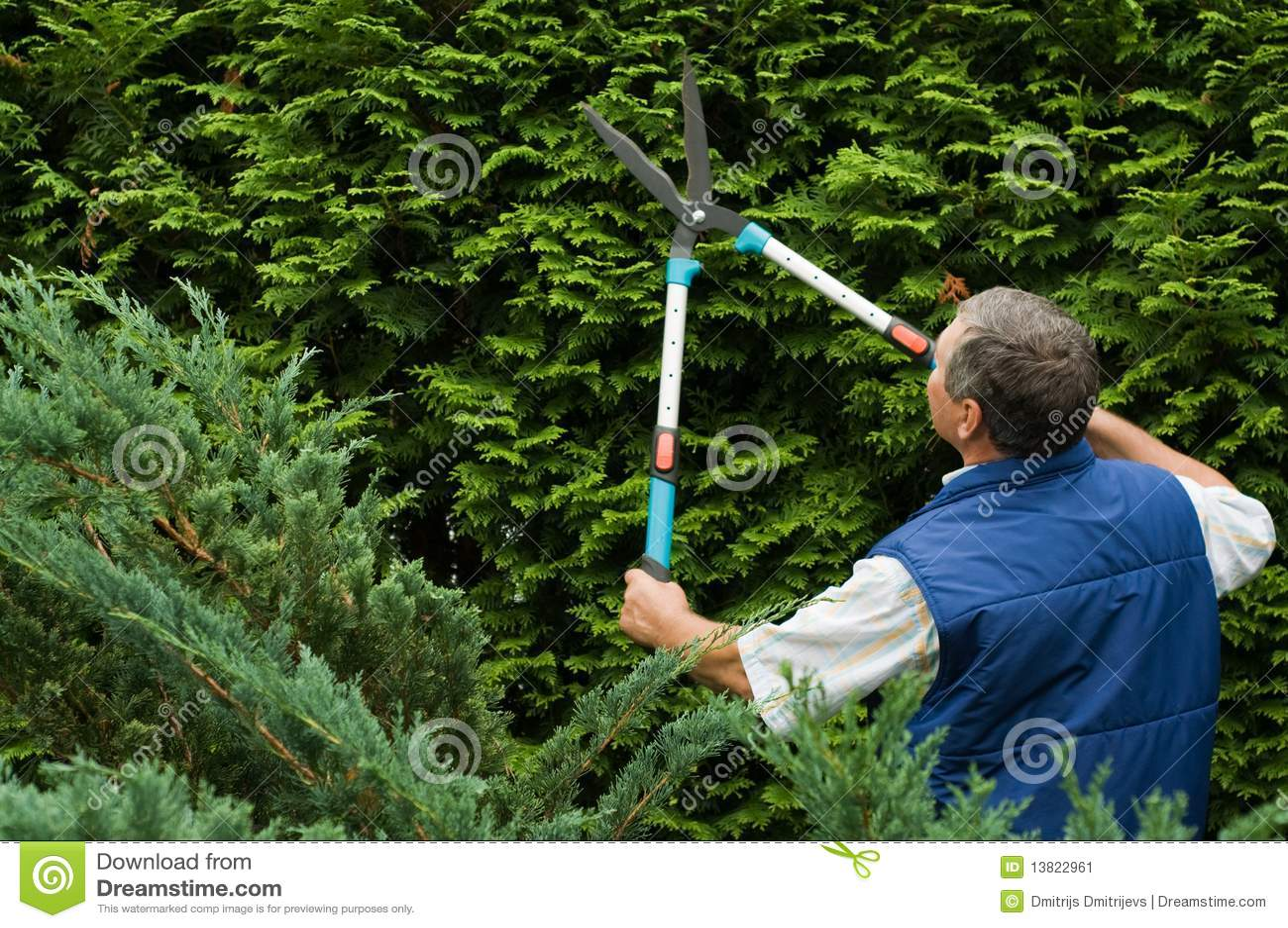 Klipp pensionären för trädgårdsmästarehäckmannen
